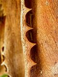 Macro image of  dry brown aloe vera leaf with teeth like thorns