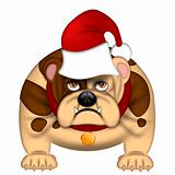 English Bull Dog with Santa Hat Isolated on White