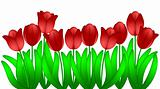 Row of Red Tulips Flowers Isolated on White Background