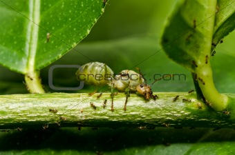 queen ant in green nature