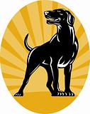 Pointer dog with sunburst retro style