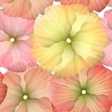 Seamless Primula Flowers 1(4).jpg