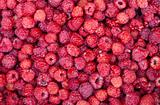 sweet fresh raspberries closeup