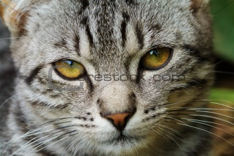 Cat closeup