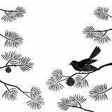 Titmouse on pine branch, cutout(974).jpg