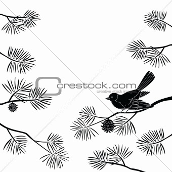 Titmouse on pine branch, cutout(974).jpg