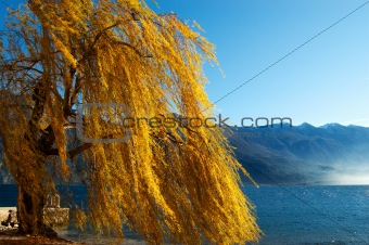 Weeping Willow - Lake
