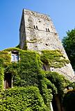 Castle covered by ivy