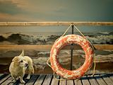 lifebuoy and dog