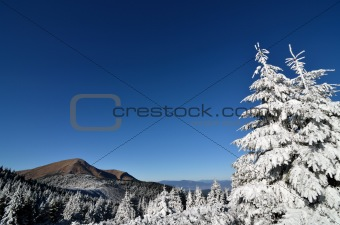 first snow in mountains, fir trees, clouds and mist