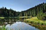 Mysterious lake among fir trees