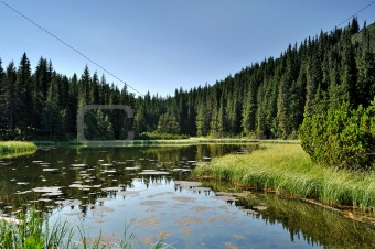 Mysterious lake among fir trees