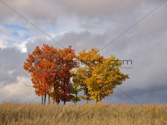 Group of young oaks against autumn clouds