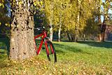 Red bike standing near a trunk large birch