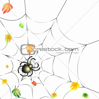 Spider on a Web in Autumn(158).jpg
