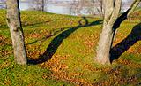 Lime tree trunks and fallen leaves in autumn. Lake