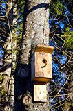 Newly nailed wooden bird nesting-box on tree.