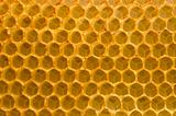 Honeycomb fo honey closeup macro background.