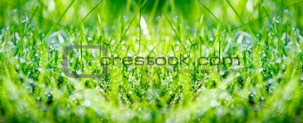 Green grass panorama