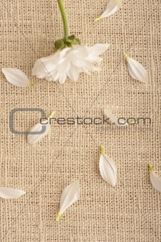 A white flower on linen