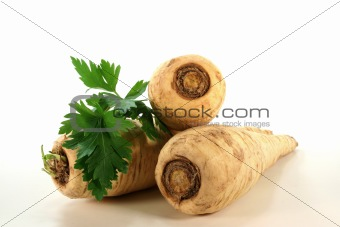 bright Parsley root