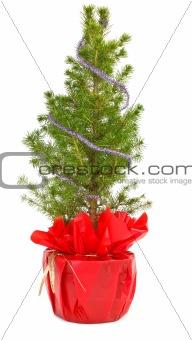 small christmas tree in decorative pot