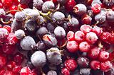 Fresh frozen berries: red and black currant