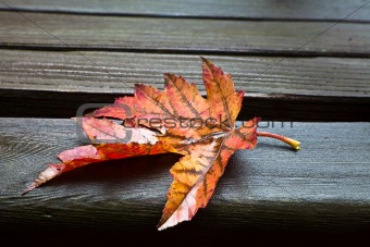 All Alone (Fall Leaf)