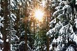 winter forest with sunbeam