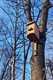Bird house on the trunk