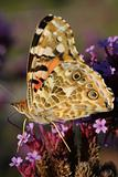 Butterfly in the nature