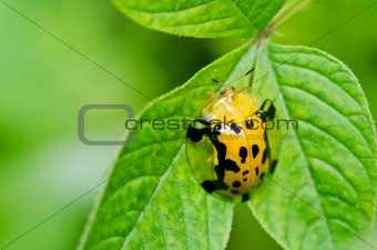 orange beetle in green nature
