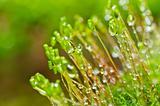 Fresh moss in green nature