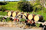 vineyard with barrels, Villeneuve-les-Corbieres, Languedoc-Roussillon, France