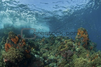 Waves breaking on coral