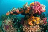 Rainbow coral