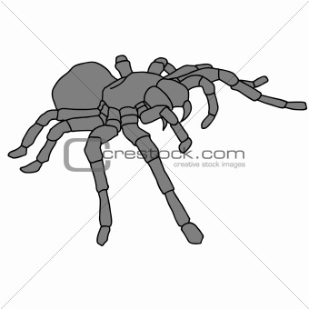 Tattoo spider tarantula on Blom background