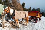 Horse Sledge in Dolomiti, Italy