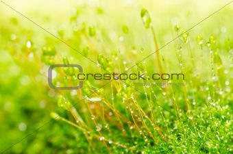 Fresh moss in green nature