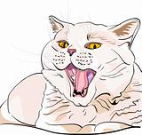 vector British shorthair lilac cat screaming MEOW