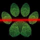 Scanned paw print