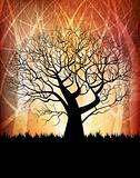 grungy tree