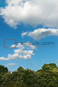 Clouds over chestnut trees