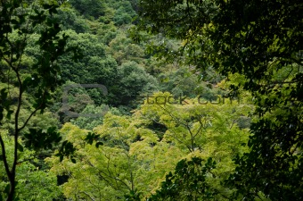 Forest canopy as seen from a mountain slope