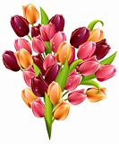 Bunch of tulips isolated