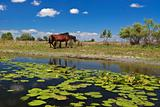 two horses on the edge of a channel of water