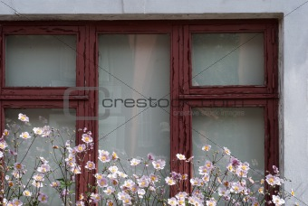 Old Danish house and flowers outside a window