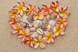 Frangipani, plumeria flower in shape of heart, filled with sea shells on sand