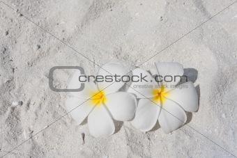 Frangipani on a beach