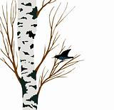 starling on birch drawing, vector illustration